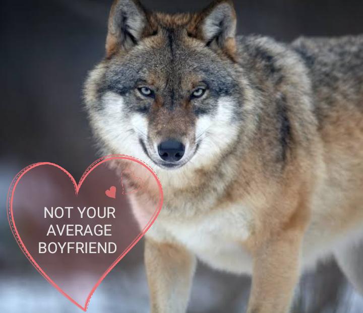 Just not your average boyfriend