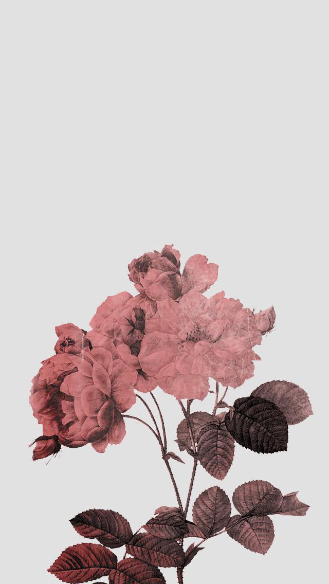 Birthday Wishes By Lunaandjay Online Books Ficfun Cute Wallpaper For Iphone 5 Best Of Vintage Flower